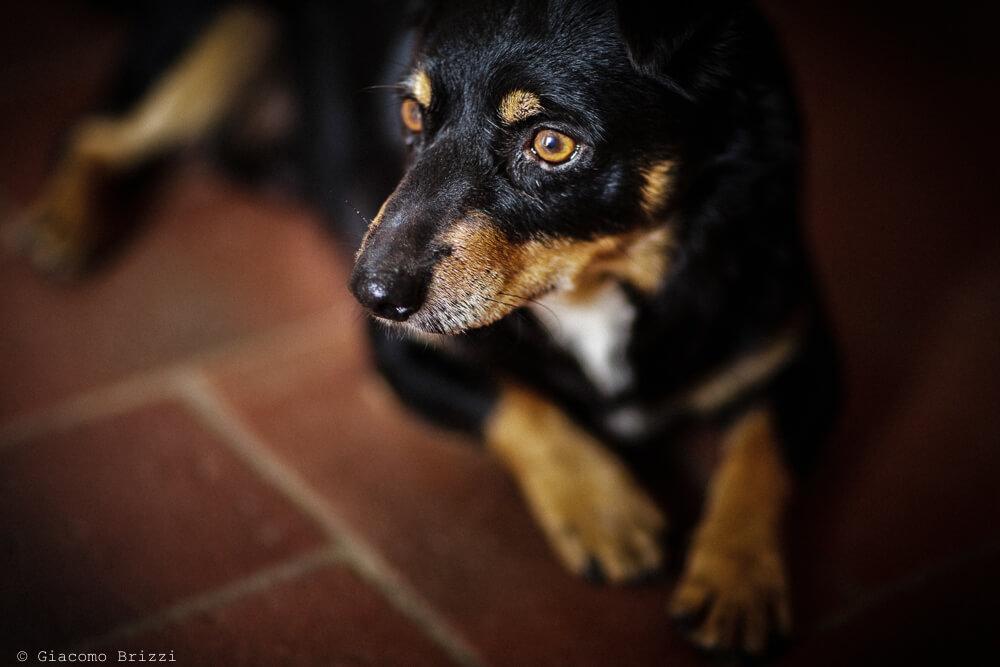 Il cane testimone Matrimonio a Sarzana