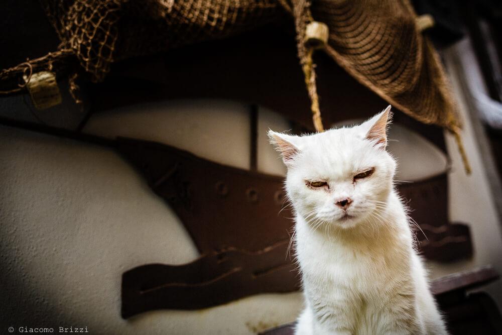 Un gattino invitato al Matrimonio a Portovenere