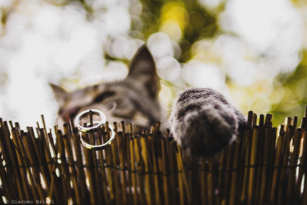 Dettaglio sulle fedi nuziali e cesta del gatto, fotografo matrimonio Sarzana, Liguria