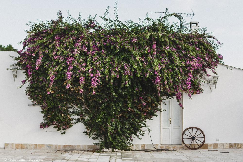 Foto di un abitazione con parete fiorita, fotografo matrimonio francavilla fontana, puglia